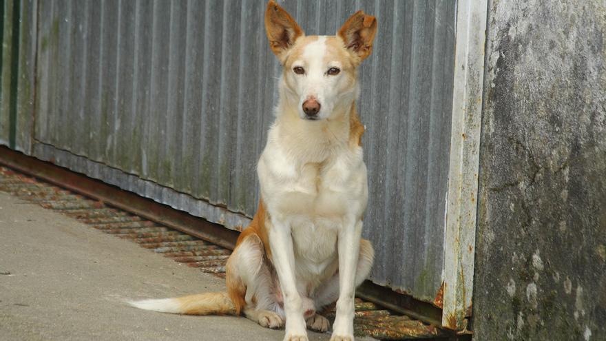 Perro abandonado en Fornelo de Montes (Pontevedra)   Foto: Flickr Contando Estrelas