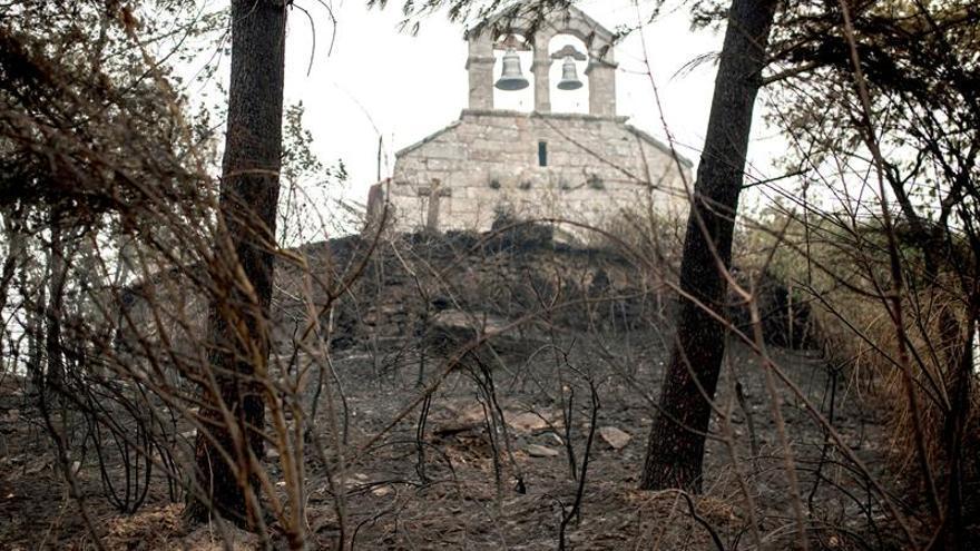 Expertos desaconsejan extraer la madera quemada tras los incendios forestales