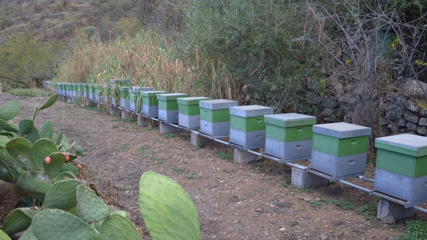 Explotación de miel Malpedrocillo.