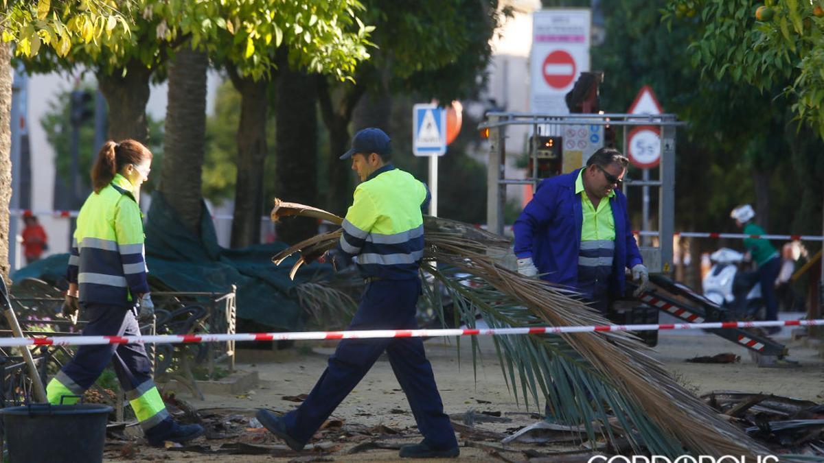 Un grupo de trabajadores, podando palmeras