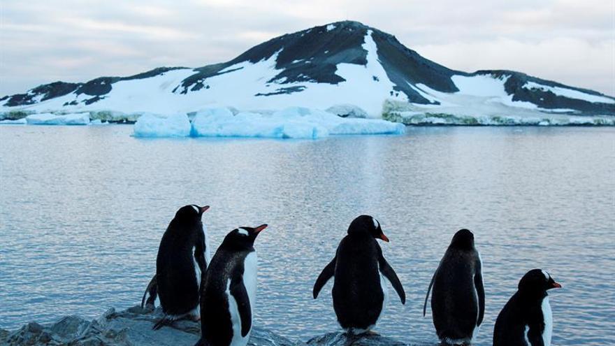 """Los pingüinos chilenos """"celebran"""" su día gravemente amenazados, según Greenpeace"""