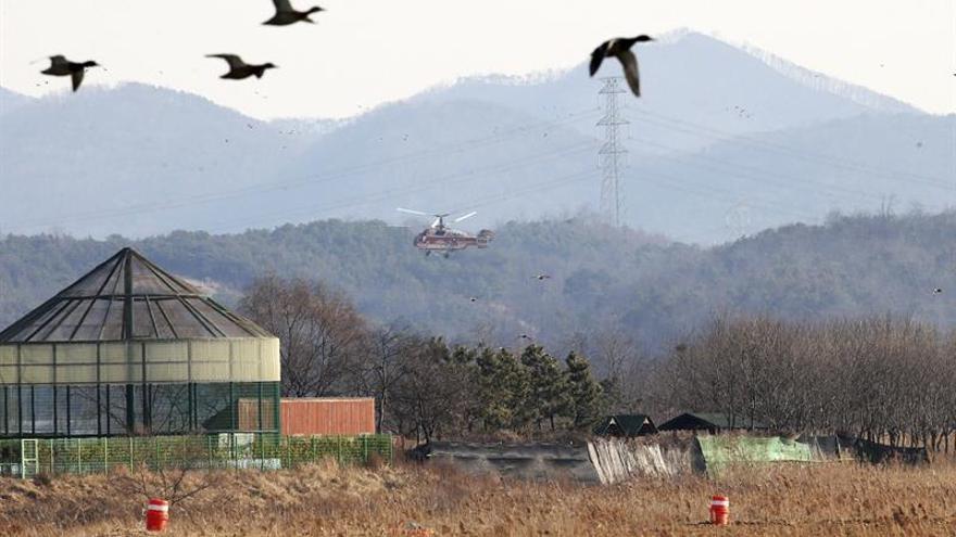 Corea del Sur suma dos nuevos casos de gripe aviar y sacrifica miles de patos