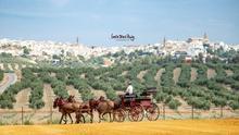 Oleoturismo en Jaén: un viaje a la esencia del olivo