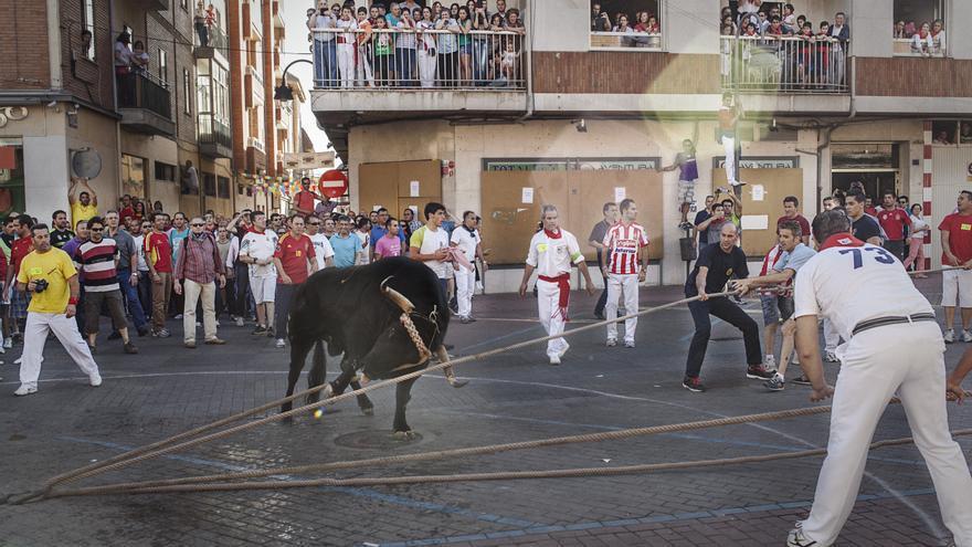 'Toro Enmaromado'. Benavente (Zamora). Foto: © Kike Carbajal