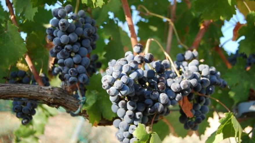 Del aguardiente de Cazalla al vino de naranja: los vinos y licores que caben en Sevilla