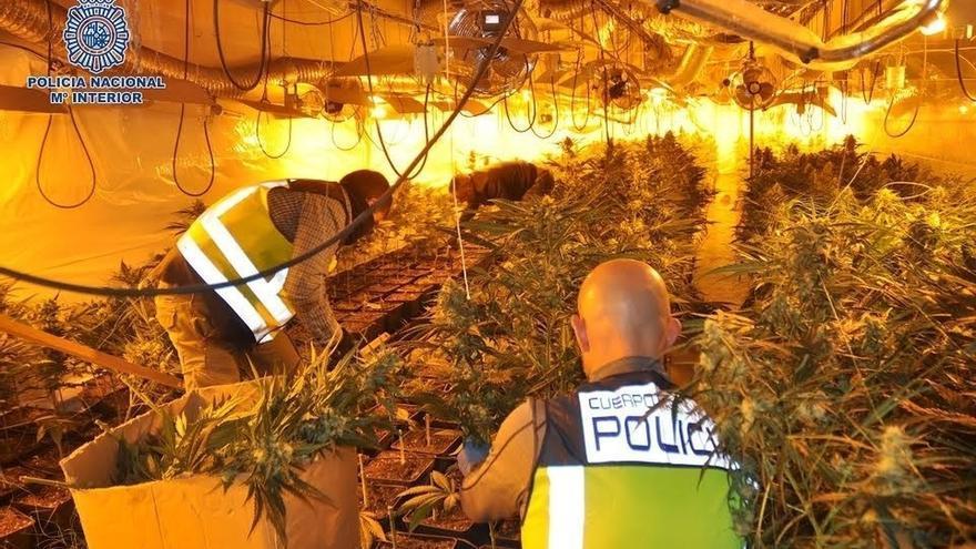 Demantelada una plantación de 1.000 plantas de marihuana en una nave industrial de Arrigorriaga