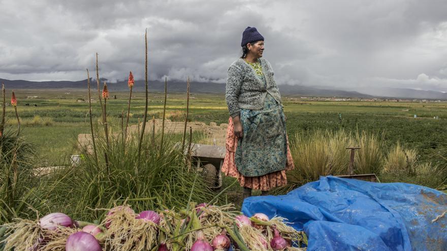 Camperola aymara a l'altiplà de Bolivia.