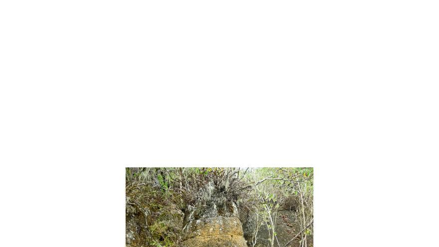 Cara esculpida en la Cueva de los Piratas, en la isla de Floreana.