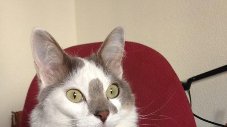 The Purring Quest Foto de Tika, CEO de Valhalla Cats.
