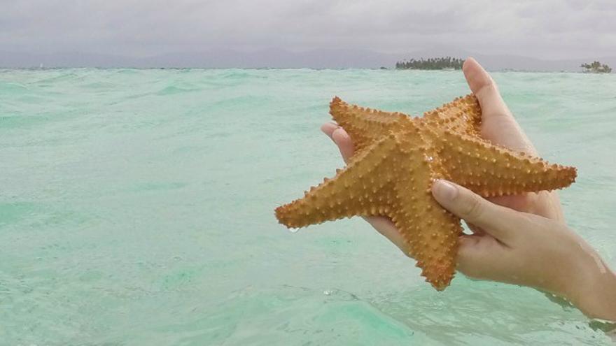 Turismo irresponsable con estrellas de mar