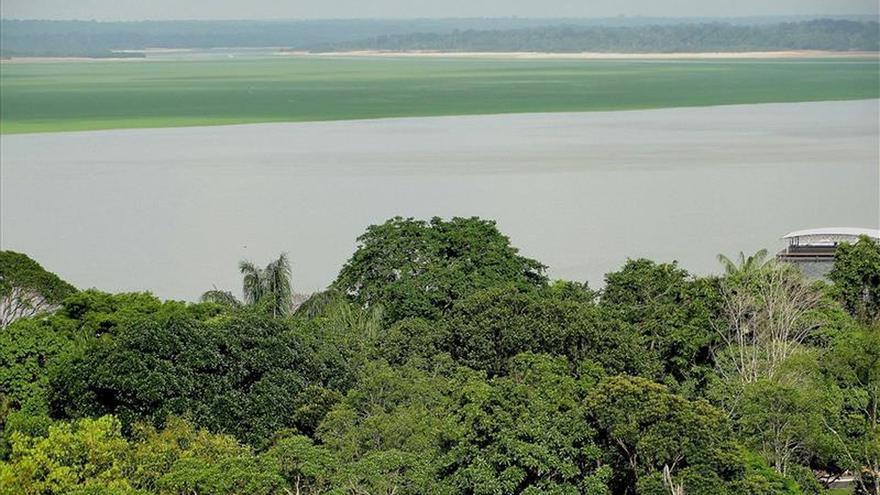 La Amazonía, camino de convertirse en sabana pero no tan rápido como se teme