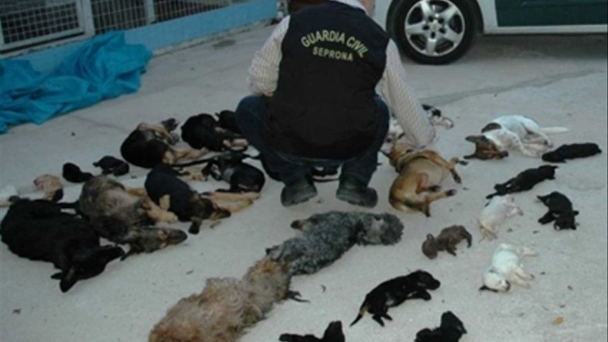 Un guardia civil observa los cuerpos de perros alojados en la perrera de Torremolinos