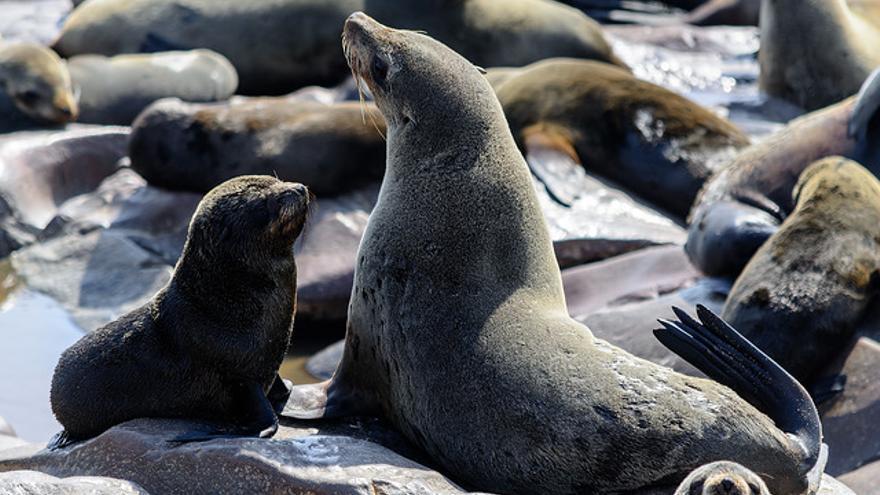 Lobos marinos en Cape Cross. Dconvertini