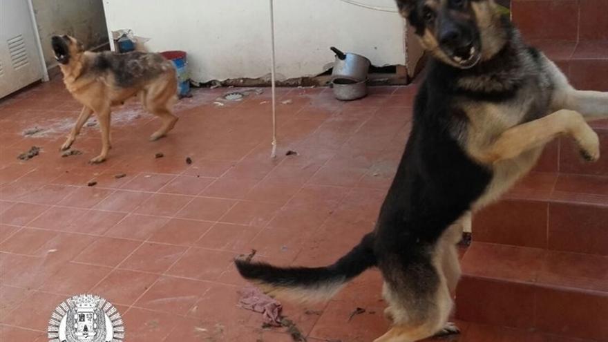 Los perros reducidos por la unidad canina de la Policía Local.
