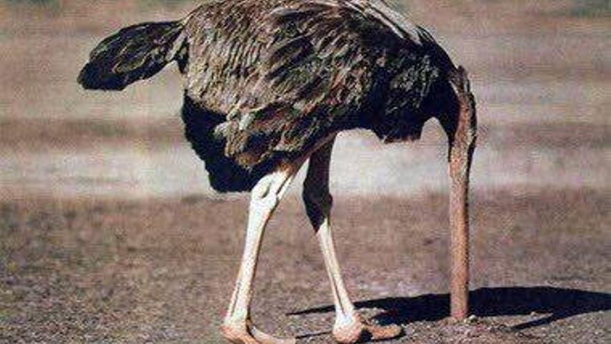 La táctica del avestruz