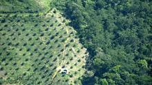Aceite de palma: La grasa más consumida y la más perjudicial para la salud