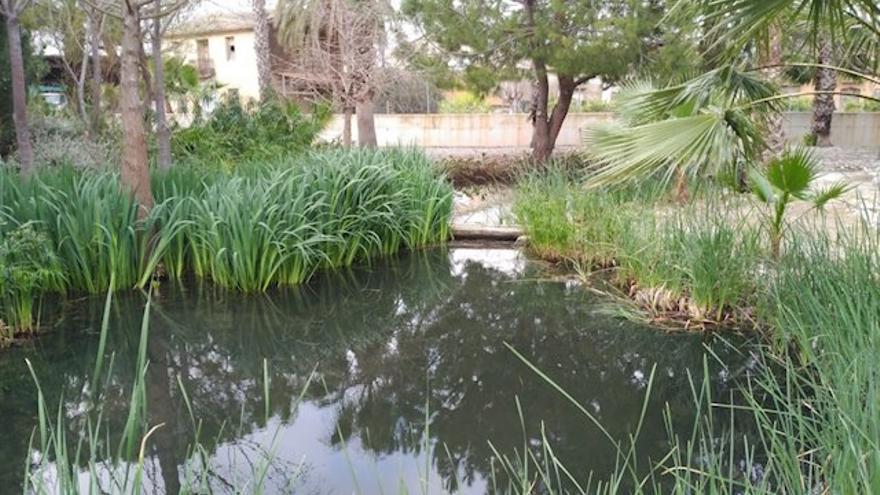 Humedales artificiales contra el cambio climático, complemento de las depuradoras convencionales