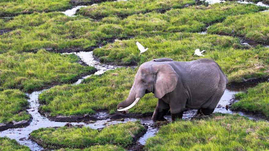 Un tribunal cree que Obama erró con la prohibición de importar trofeos de elefantes