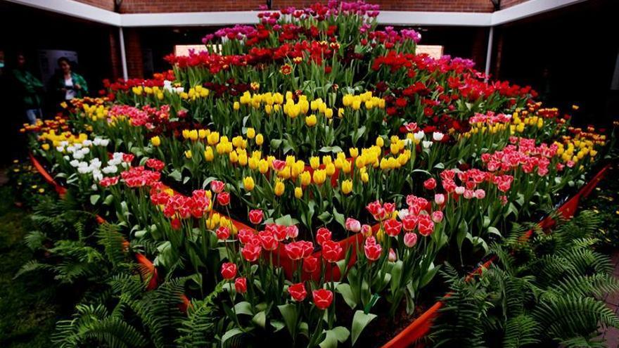 Holanda expone sus coloridos y variados tulipanes en el Jardín Botánico de Bogotá
