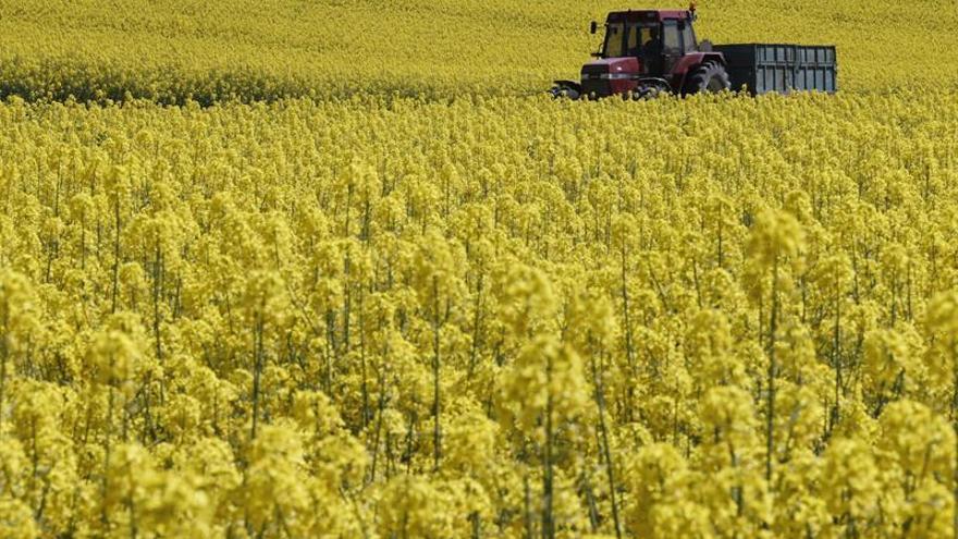 España pide mantener agricultura y cohesión como pilares del presupuesto de la UE