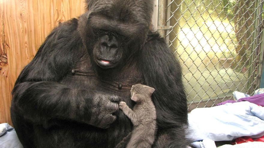 Koko, con uno de los gatitos a los que adoptó