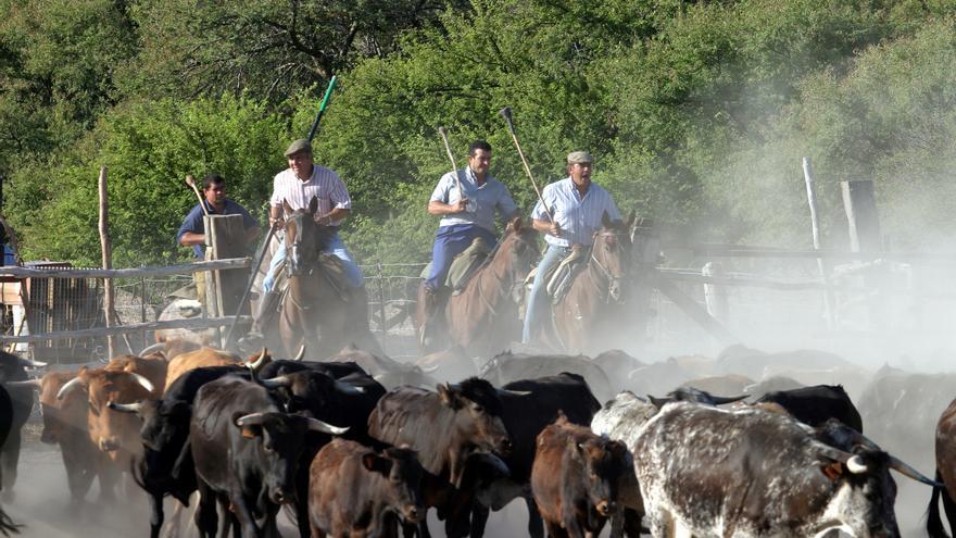 Actividad ganadera en el Cortijo de Arenales.