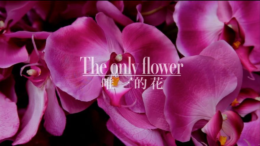 The_only_flower_poster