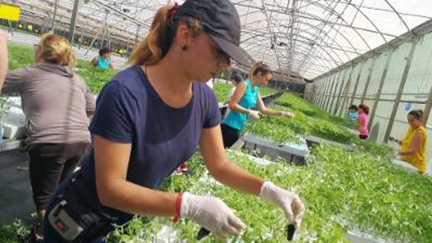 Mujeres en el desempeño agrícola
