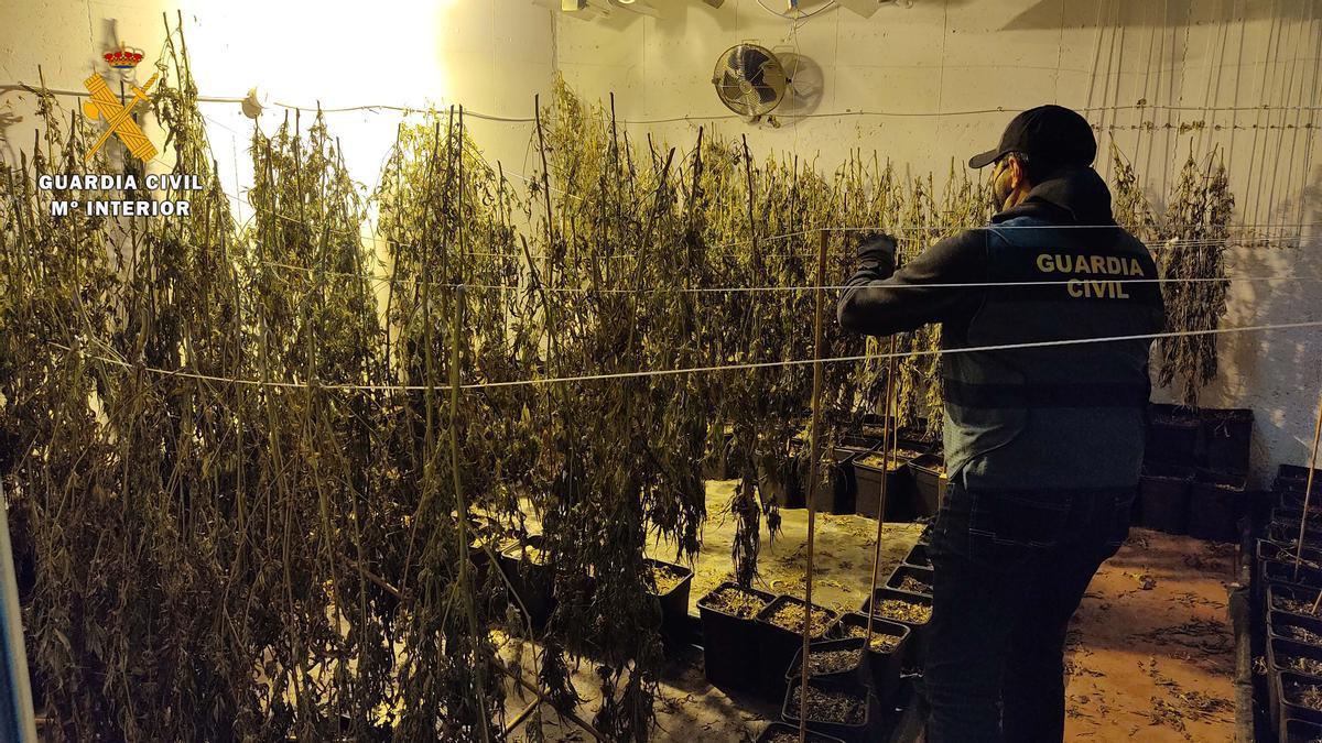 Marihuana en Posadas