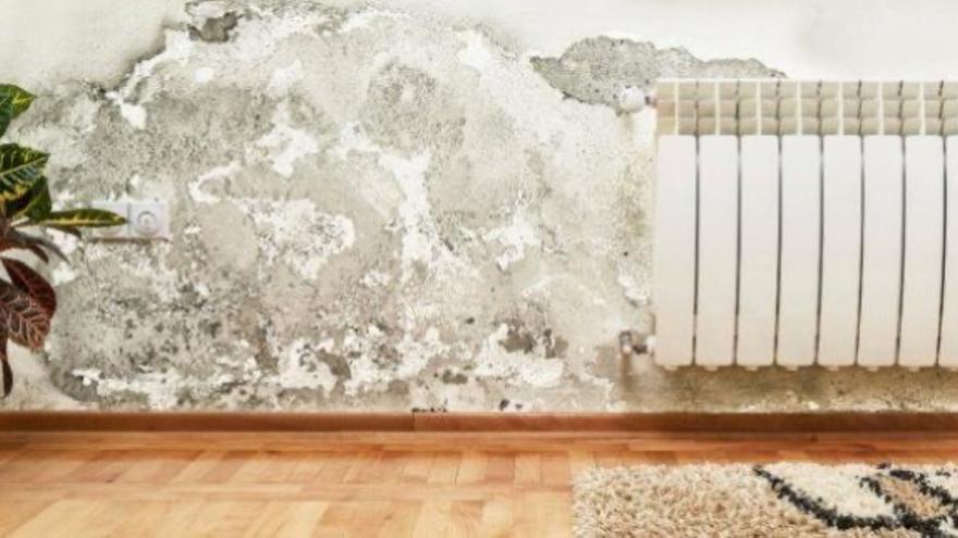 Cómo quitar el moho de una pared de yeso