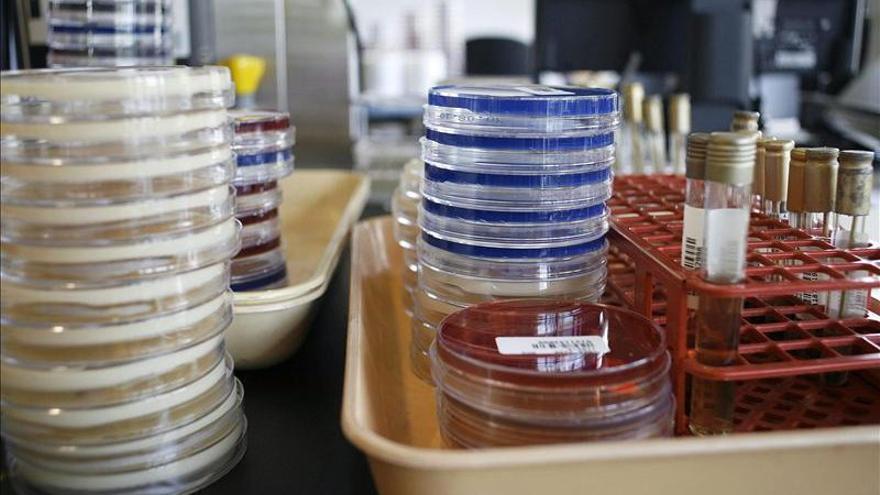 Placas de Petri usadas en un laboratorio para realizar pruebas bacteriológicas