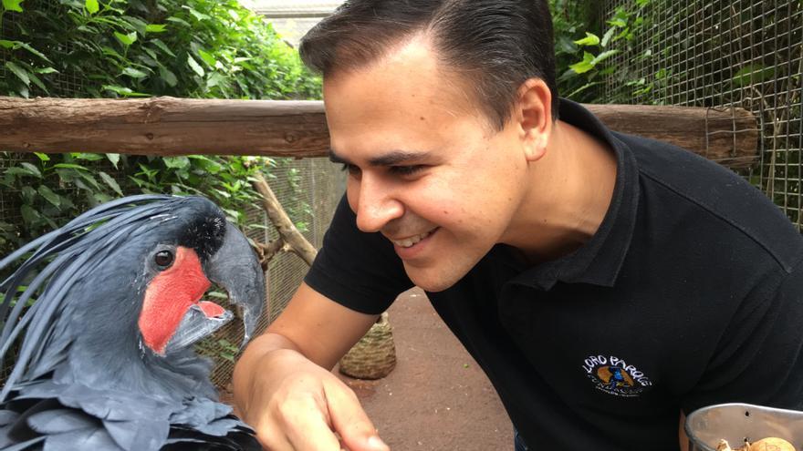 El biólogo de Loro Parque Fundación Rafael Zamora Padrón, junto un ejemplar  de cacatúa palmera