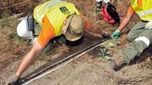 Capturan 573 ejemplares de culebra real de California en Gran Canaria en 2013