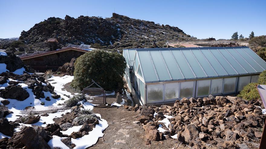 El vivero del Teide protege semillas de más de 200 especies