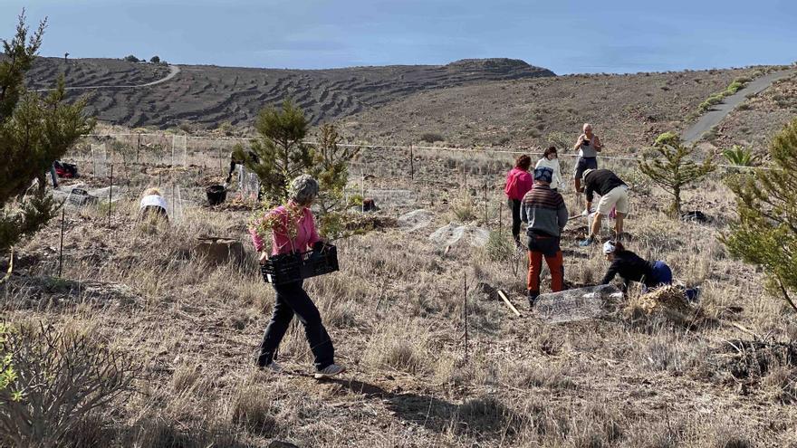 La Gomera 'planta' conciencia en el Día del Árbol
