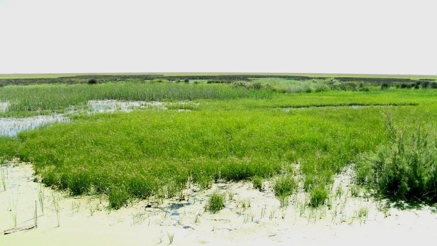 WWF presenta un manual para lograr una agricultura implicada en la conservación de Doñana