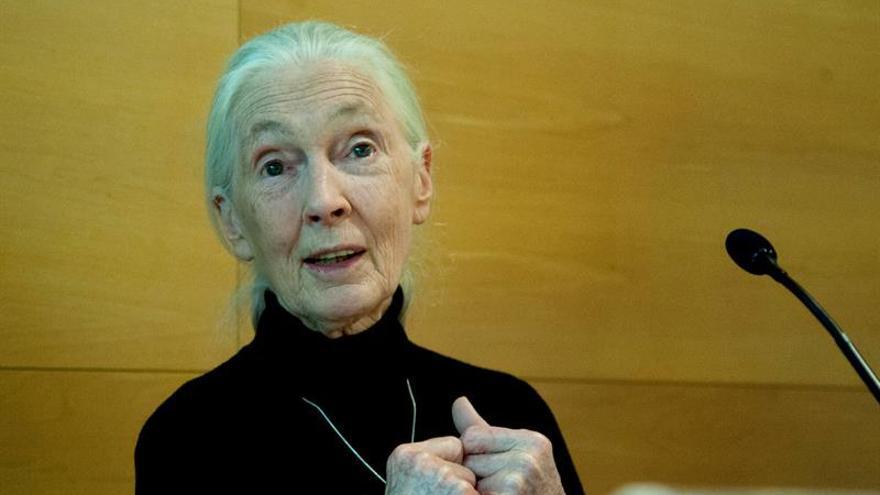 """Jane Goodall: """"Algunos países europeos tratan a los refugiados como ganado"""""""