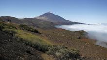 El Parque Nacional del Teide estudia si Tenerife tuvo bosques de cedro en las cumbres