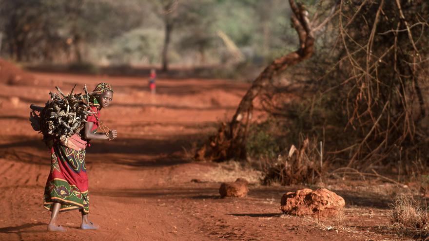 En muchas zonas del mundo, como esta del distrito de Garba Tulla, en Kenia, las niñas se ven obligadas a pasar horas recogiendo leña para las tareas domésticas. En el país, trabaja el 26% de la población infantil. (Piers Benatar/Panos Pictures/ActionAid)