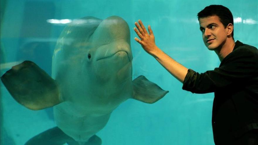 El hombre y la beluga interactúan con el lenguaje universal de la música