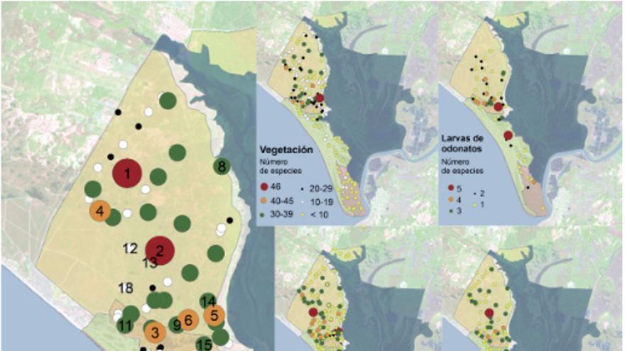 Número de especies distribuidas por las lagunas de Doñana