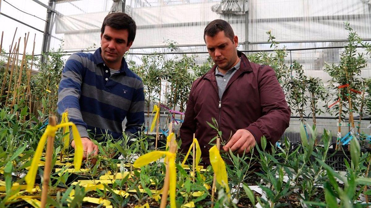 Los investigadores de Dauco Carlos Trapero y Pedro Valverde.