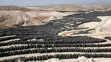 Neumáticos en el Complejo Ambiental de Arico