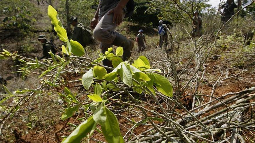 Colombia cerró 2013 con 48.000 hectáreas de coca, las mismas que en 2012