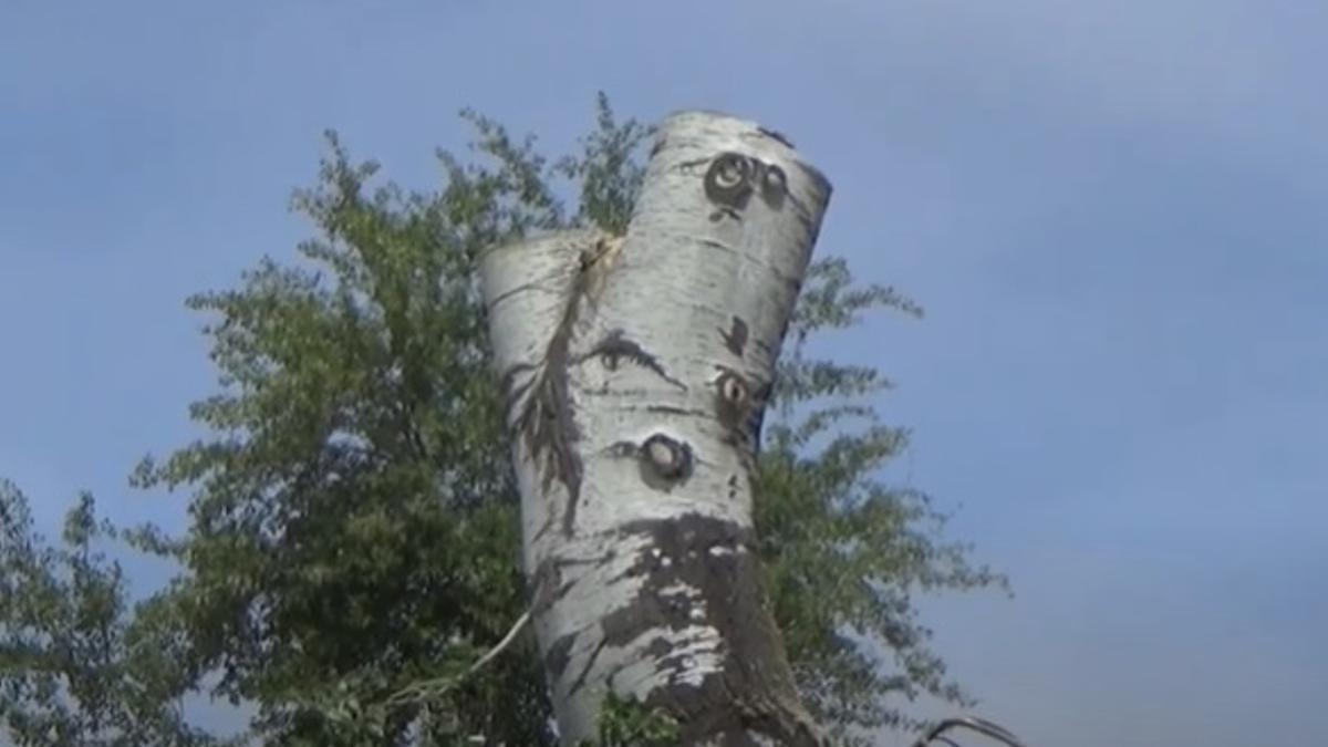 Una imagen del vídeo 'Green Apocalypse'  difundido por Salicor-Ecologistas en Acción