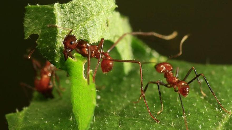 se produce un descenso del 2,5% anual en la cantidad total de insectos, una cifra que sugiere que podrían desaparecer por completo en un siglo.