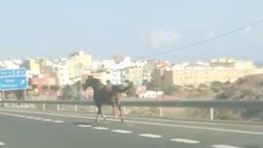 Un caballo al galope en una autopista de Gran Canaria sorprende a los conductores