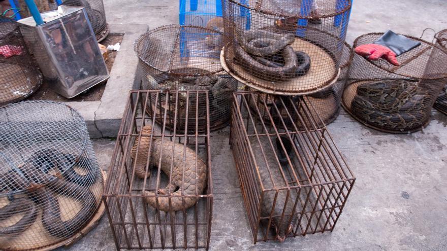 Mercado de especies en peligro en Myanmar.