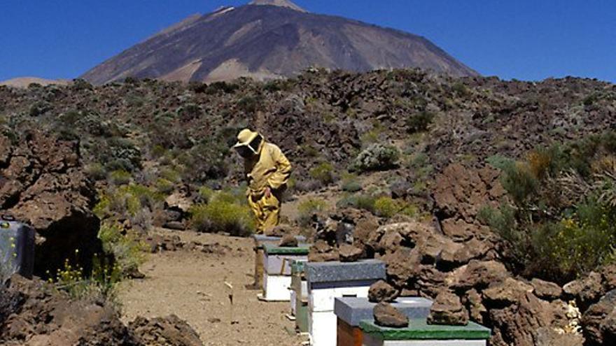 Varias colmenas y un apicultor en el Teide.