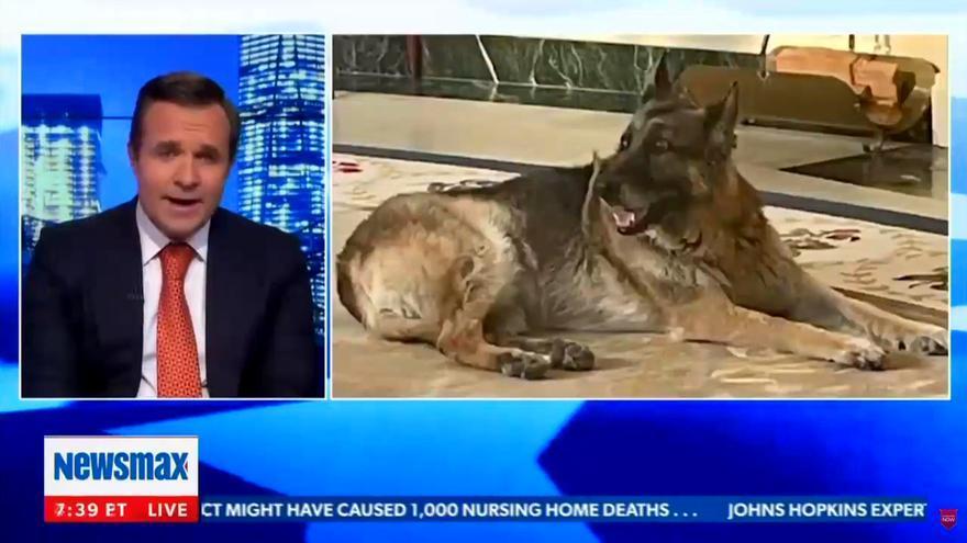 """Un presentador de TV critica a Biden por el aspecto de su perro: """"Necesita un baño"""""""